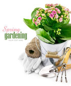 Spring flower in bucket with garden tool and gloves — Stock Photo