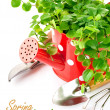 Green plant in red watering can with garden tools — Stock Photo