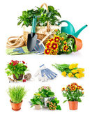 Set spring flower with garden tool — Stock Photo