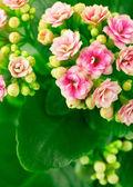 Lente achtergrond met roze bloemen — Stockfoto