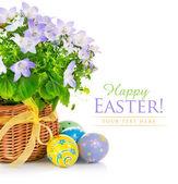Huevos de pascua con flores de primavera en la cesta — Foto de Stock