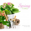 Spring flower in pail with garden tools — Stock Photo