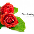 Red roses with green leaves — Foto de Stock