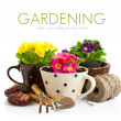 Spring flower in pot with garden tools - Stock Photo