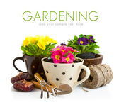 Spring flower in pot with garden tools — Stock Photo