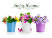 Spring flowers with green leaves in bucket — Stock Photo