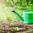 Green watering can in garden on ground - Stock Photo