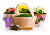 Spring flower in pot with green grass basket — Stock Photo