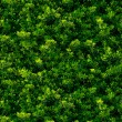 Seamless texture of green leaves - Photo