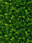 Seamless texture of green leaves — Stock Photo