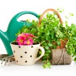 Flowers and green plants for gardening with garden tools — Stok fotoğraf