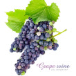 Fresh grapes wine with green leawes — Stock Photo