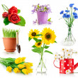 Set bouquet flowers in vase and pot — Stock Photo