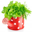 Green herbs in red watering can — Stock Photo