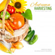 Autumnal harvest vegetables and fruits in basket — Stock Photo #29926247