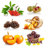Set autumnal vegetables and fruits — Stock Photo