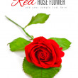 Red rose with green leaf — Foto Stock