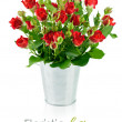 Red roses with green leaves — Stock Photo #33912287