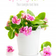 Stock Photo: Spring flowers in bucket