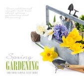 Flores da primavera em cesta de madeira com ferramentas de jardim — Foto Stock