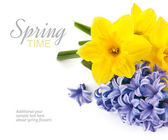 Bunch spring flowers — Stock Photo