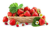 Basket fresh strawberry with green leaf and flower — Stock Photo