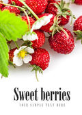 Berries fresh wild strawberries with green leaf and flowers — Stock Photo