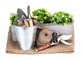 Garden tools in bucket with green plant — Stock Photo