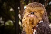 A Star Wars fan dressed as Chewbacca marches in the annual DragonCon parade — Stock Photo