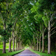 Rural road lined by oak trees — Stock Photo #26082277