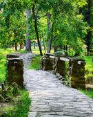Leśną drogą przez most w dzień jasny wiosenny — Zdjęcie stockowe