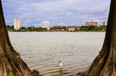 Downtown Lakeland, Florida, from Lake Morton, or Swan Lake — Stock Photo