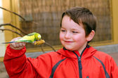 Happy boy holding and feeding parakeet — Stock Photo