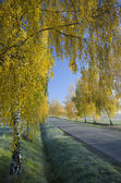 The road and autumn birch — Stock Photo