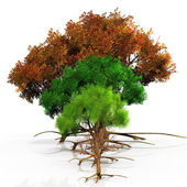 Four trees with the seasons — Stock Photo