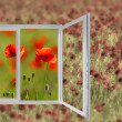 The poppies field — Stock Photo