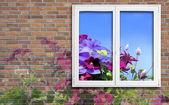 Window and flowers — Stock Photo