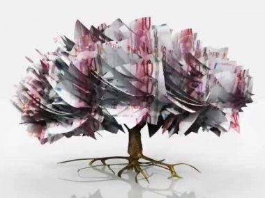 Money tree isolated on white — Stock Video
