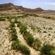 Stock Photo: Spring in desert