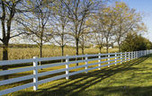 White country fence — Foto Stock