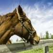 Head of an horse in a farm — Stock Photo