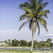Palm trees by green lawn resort in Naples, Florida - Stock Photo