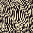 Zebra pattern — Stock Photo #30714503