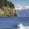 Wildlife Cruise around Resurrection Bay in Alaska — Стоковое фото