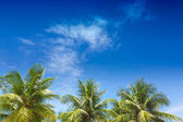 Palm trees in the blue sunny sky — Stock Photo