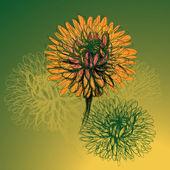 Flowers Chrysanthemum — Stock Vector