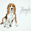 Beagle — Stock Vector