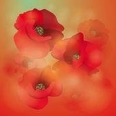 Field poppy — Stock Vector