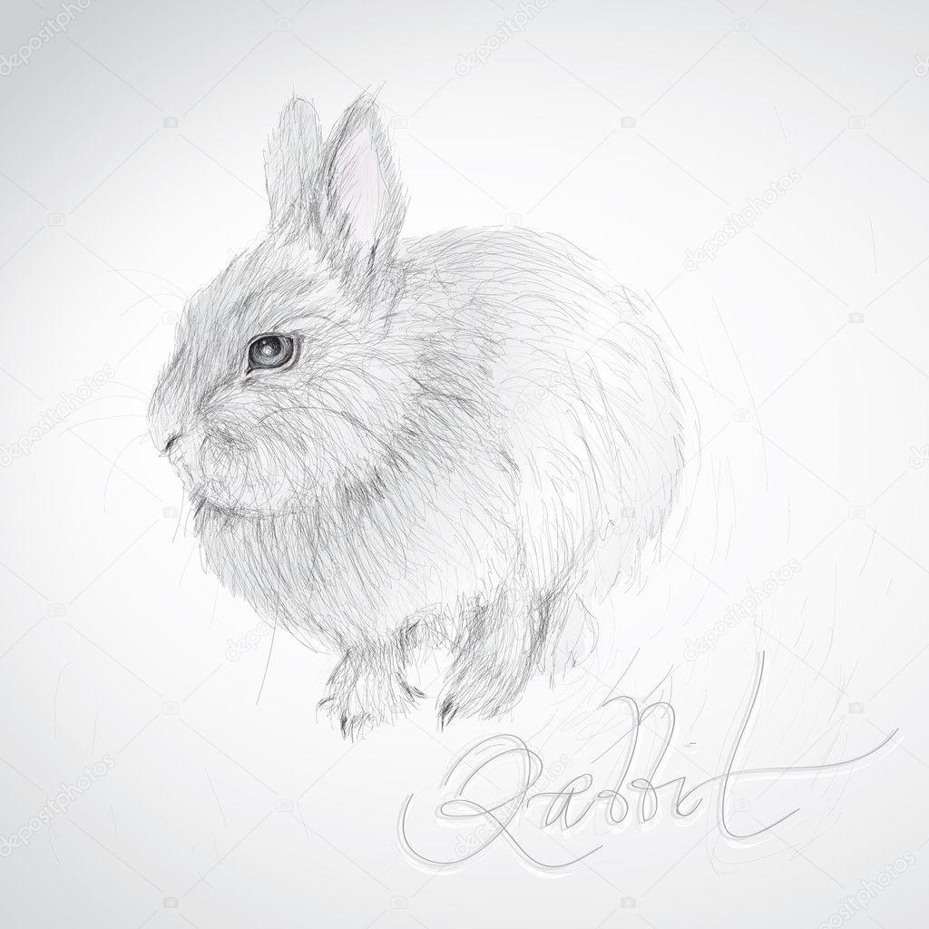 Realistic rabbit illustration - photo#6