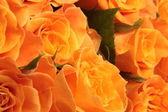 Orange roses background — Stock Photo
